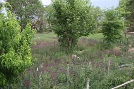 how to make a food forest permaculture institute