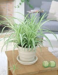 bedroom plants lou u0027s crazy world