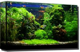 How To Clean Fish Tank Decorations Planted Freshwater Fish Tank Aquarium Cleaning And Maintenance