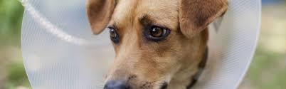the animal whisperer pet communicator talk to animals