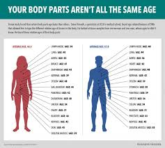 Parts Of A Tissue Some Parts Of Your Body Age Faster Than Others Houston Chronicle