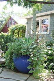 container plant ideas landscape modern with sculptured plants