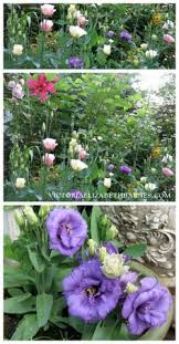 7 tips for growing a cut flower garden and how to make beautiful