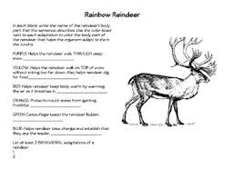 rainbow reindeer animal adaptations by megan hart tpt