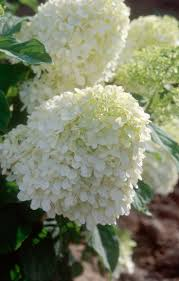 131 best white images on pinterest outdoor plants balcony and