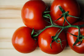 light requirements for growing tomatoes indoors growing tomatoes indoors using led grow lights