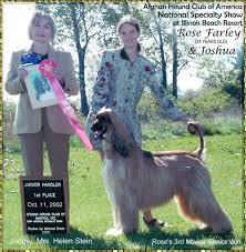 afghan hound national dog show 2002 afghan hound club of america national specialty shows photo