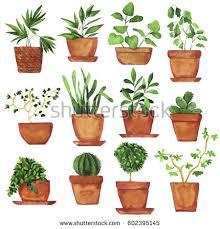 house plants flowers pots flat style stock vector 370016816