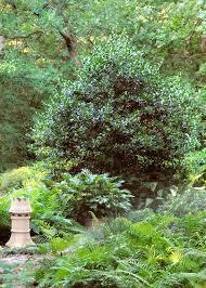 Backyard Privacy Trees 65 Best Back Yard Images On Pinterest Backyard Ideas Garden