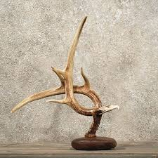 fantastic deer antler decor whitetail deer antler eagle deer