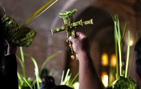 palms for palm sunday palm sunday fronds churches should buy palms from environmentally