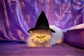 halloween horror nights upc code 2015 10 halloween pet costumes that are next level cuteness ebates com