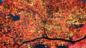 1920x1080 fall wallpaper 1920x1080 autumn colors desktop pc and mac wallpaper