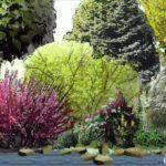 Shrub Garden Ideas Garden Designs Shrub Garden Design Plans Best 25 Landscaping