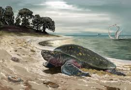 world u0027s oldest sea turtle fossil discovered