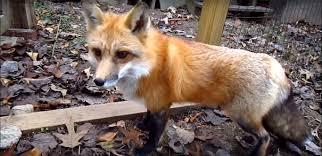 Kansas wild animals images Kansas city animal removal mo and ks jpg