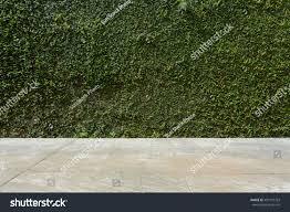 concrete floor green leaf ivy plant stock photo 493110703
