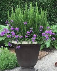 kitchen gardening ideas planters amazing container flower gardening unique container