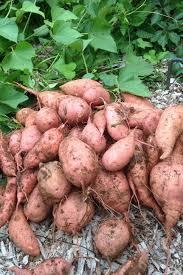top veggies to grow in the heat hgtv