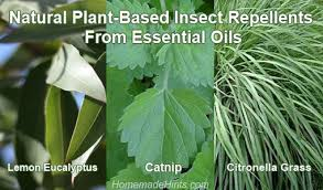 natural mosquito repellents best plant based natural insect repellents for mosquitoes and more