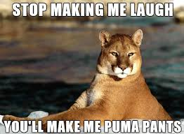 Animal Pun Meme - bad pun puma meme bulletin board pinterest worst puns meme