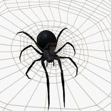 black widow spider coloring page
