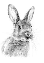 898 peter rabbit images rabbits peter rabbit