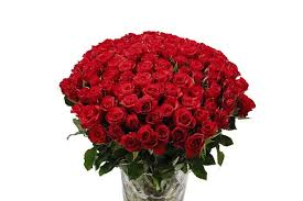 roses valentines day s day flowers aldi selling 100 roses at bargain
