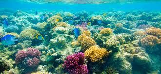 snorkeling images Catamaran reef snorkel key west snorkeling tours jpg