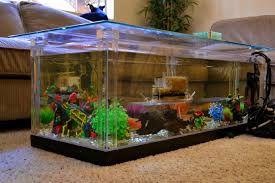 interior magnificent amusing modern fish tanks pictures design