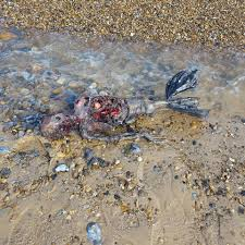 in which state is it illegal to dress up as a priest on halloween mermaid washed up washed up on norfolk beach claims man who found