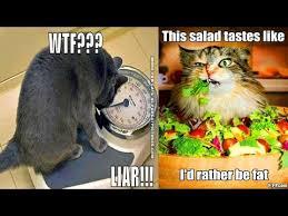 diet funny memes