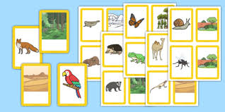 and their habitats matching cards animals habitats