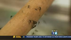 Duke Primary Care Wake Forest Should You Avoid Summer Travel Because Of Zika Virus Abc11 Com