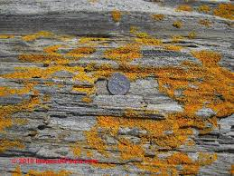 How To Remove Lichen From Patio Stone U0026 Stucco Stain Diagnosis U0026 Cure