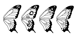 how to draw animals butterflies their anatomy and wing patterns
