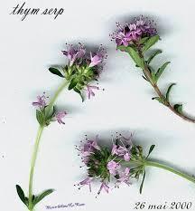 fleur de thym cuisine repas et menus pour les enfants menu du mardi 14 01 09 recette de