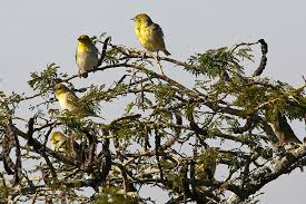 birds in a tree photograph by trevor c steenek