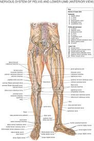 Anatomy And Physiology Nervous System Study Guide Fysiurgisk Massør Tag Hånd Om Din Krop Anatomi Pinterest