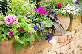 balkon grã npflanzen 2 pflegetipps für balkonpflanzen