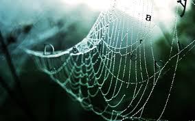 halloween nature background spider spider desktop wallpaper wallpapersafari