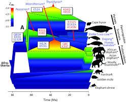 Home Evolutionary Healthcare Evolution Of Mammalian Diving Capacity Traced By Myoglobin Net