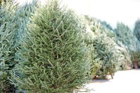 What Trees Are Christmas Trees - fresh cut u0026 live christmas trees the home depot canada