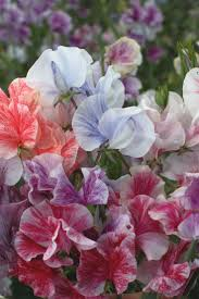 Highly Fragrant Plants 92 Best Fragrant Flowers And Gardens Images On Pinterest