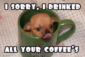 Puppy Memes - i sorry i drinked all your coffee puppy memes and comics