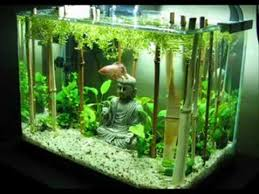 Aquascape Fish Fishtank Evolution Planted Tank Aquascapes Youtube