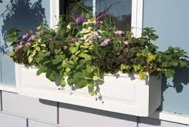 window box planting plans horticulturehorticulture