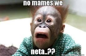 Neta Meme - no mames we neta meme de mono asustado imagenes memes