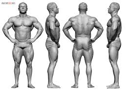 Male Body Anatomy Organs Anatomy 360 U2014 Male Weight Bearing Scans In Motion Anatomy
