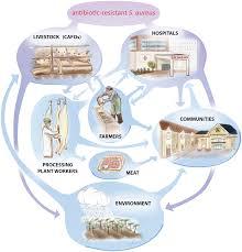 livestock associated staphylococcus aureus the united states